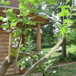 Технология прививки дерева:сложно ли прививать плодовое дерево?