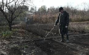 Подготовка почвы к зиме:советы почвоведа