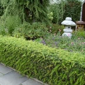 Кустарники и деревья - прекрасная возможность для  декорирования забора