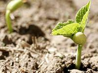 Как определить сойдут ли семена огурцов?
