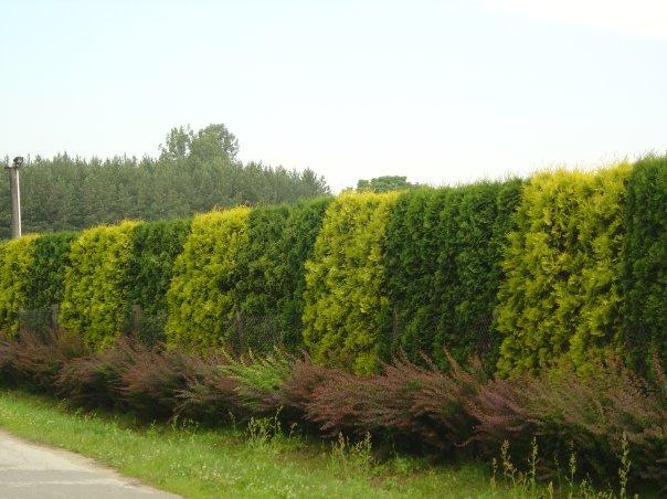 Кустарники и деревья