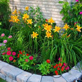 Как высаживать рассаду цветов на доращивание?
