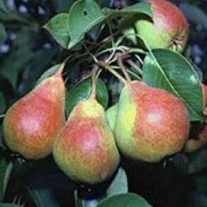 Сентябрь - заботимся о будущем урожае
