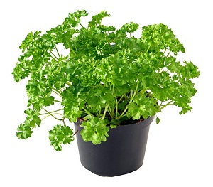 Витаминная зелень