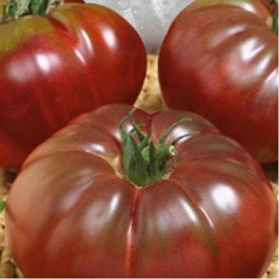 свои семена помидор