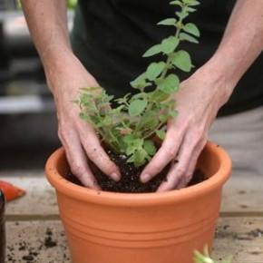 Когда нужно подкармливать комнатные растения?