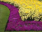 Какие цветы высаживать во второй половине октября?