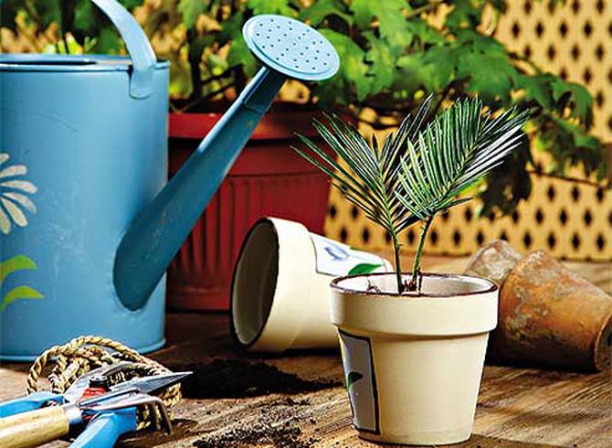 пересадки комнатных растений р