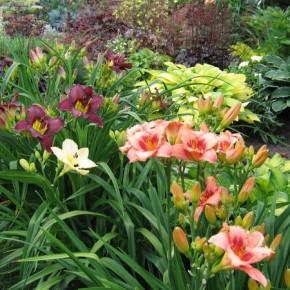 Выращивание лилий:советы по размножению