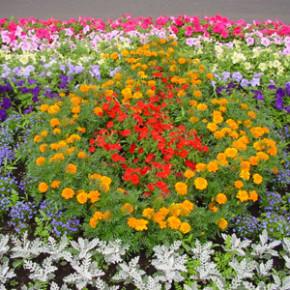 Как подкармливать цветник в октябре?