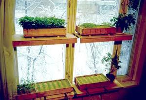 Собственный огород в доме