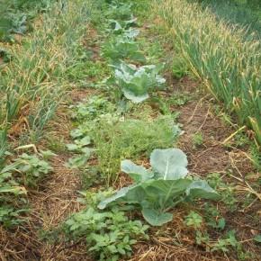 Почвы нечерноземной полосы:какие удобрения применять