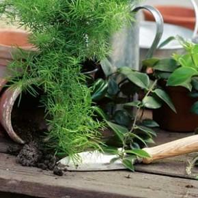 Главное правило пересадки комнатных растений - растению лучше будет в тесном горшке , чем в очень просторном