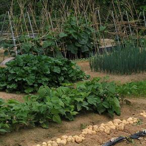 Как предотвратить потерю плодородия почвы?