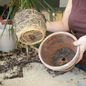 Как правильно удобрять комнатные растения?