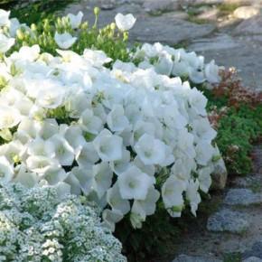 Как правильно выращивать многолетние цветы?
