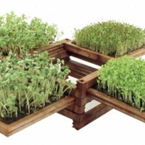 Огород в квартире:методы выращивания овощей