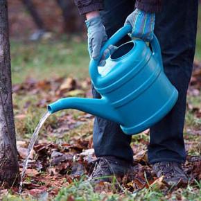 Как правильно поливать деревья?
