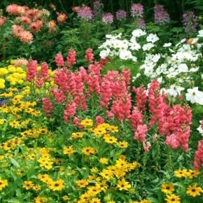 Какими удобрениями подкармливать лилии летом?