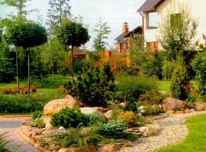 Расположение плодового сада:где сажать смородину и агрус