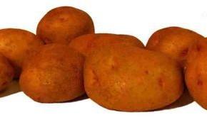 Сорта картофеля украинской селекции