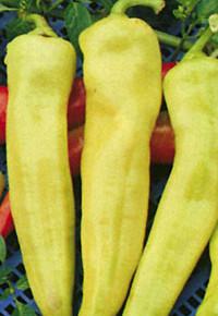 Сладкий перец Анастасия:характеристика сорта