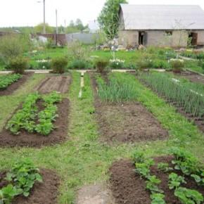 С какой стороны лучше всего разбивать огород?
