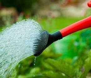 Какие растения не требуют большой влажности?