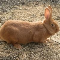 Как правильно подкармлмвать молодняк кроликов