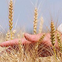 Как получить хороший урожай сельскохозяйственных культур?