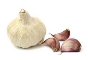 Какой сорт чеснока самый урожайный?