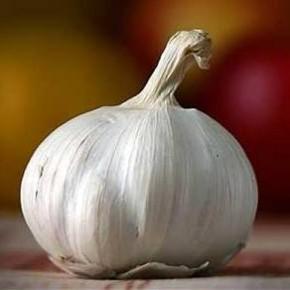 Выращивание чеснока:болезни и вредители