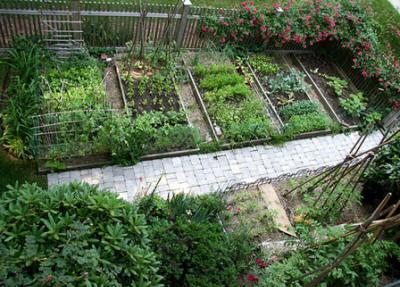 овощи нельзя сажать рядом