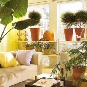 Как ухаживать за комнатными растениями зимой?