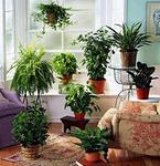Как отражается нехватка питательных элементов на растениях?