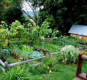 Возле каких растений нельзя сажать огурцы?