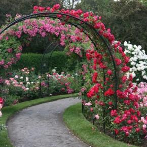 С мечтой об идеальном саде