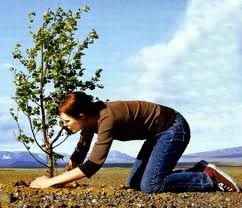 Благоприятные дни для посадки рассады перца,помидор,капусты,баклажан по лунному календарю в 2015 году