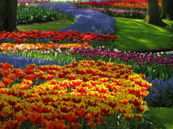 Праздник цвета и цветов в Кейкенхоф