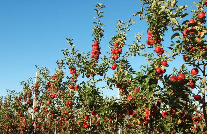 Уроки бельгийского кооператива для садовода
