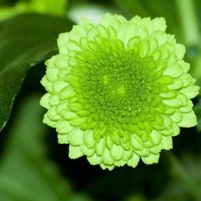 Зеленый цвет покровительствует сотрудничеству