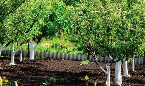 Прежде чем сажать деревья, посмотрите, что растет у соседа