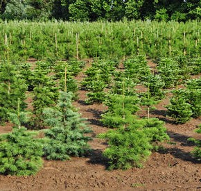 Как бороться с несанкционированной вырубкой лесов?