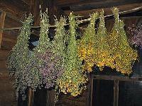 Сбор, сушка и хранение растений