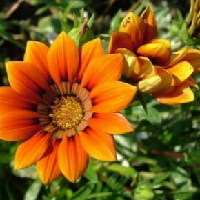 Благоприятные дни для посева цветов на рассаду в 2016 году