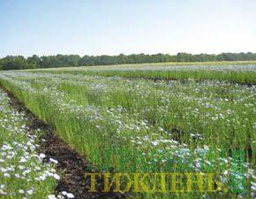 Резерв повышения урожаев льна масличного