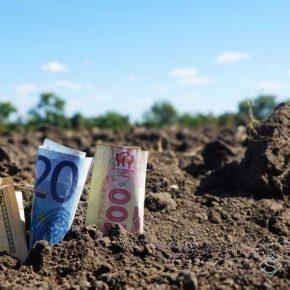 План посевов: что и когда сеять на рассаду в 2012 году