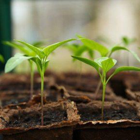 Благоприятные дни для посева семян овощей на рассаду в 2021 году